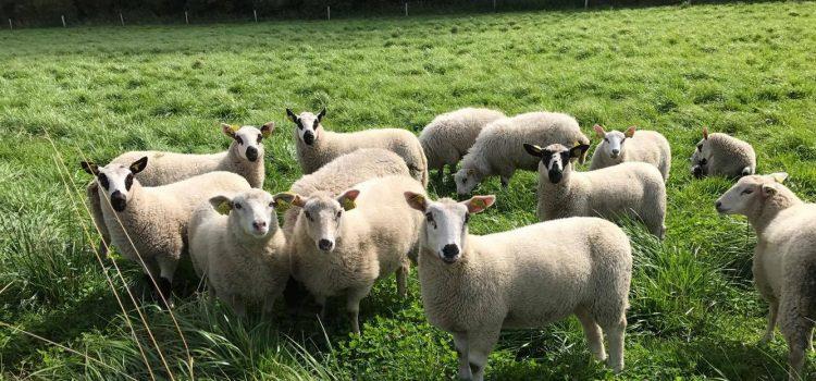 Slip fårene læs
